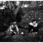 1965-cueillette des olives à Grasses